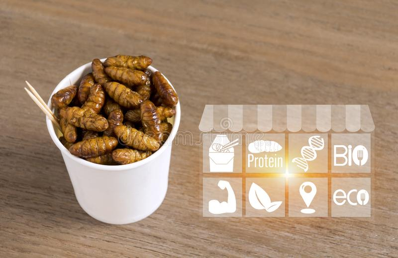 Silkworm Pupae insects for eating as food with icons media nutrition. Chrysalis silk worm deep-fried snack in disposable cup for vector illustration