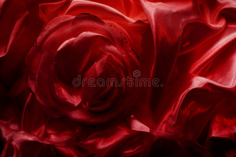 Silky rose stock image