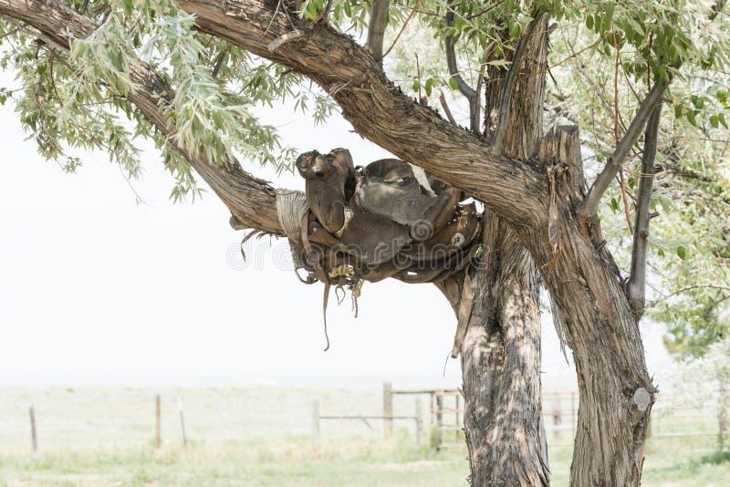 Silla de montar vieja en un árbol en un rancho histórico en Colorado rural fotos de archivo