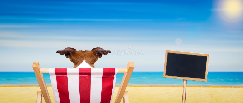 Silla de playa del perro en verano imagen de archivo libre de regalías