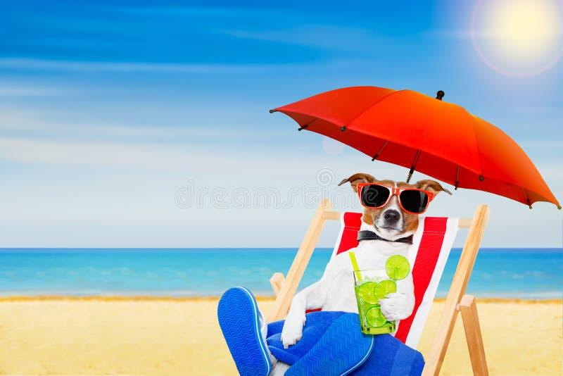 Silla de playa del verano del perro imagenes de archivo
