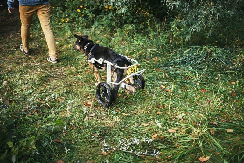 Silla de ruedas del perro fotografía de archivo libre de regalías