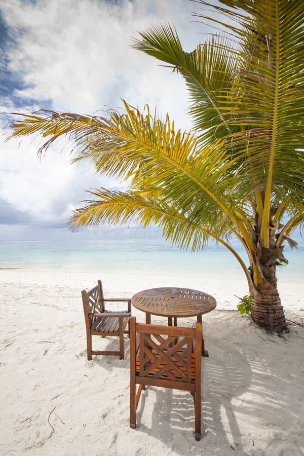silla y palma de vector foto de archivo