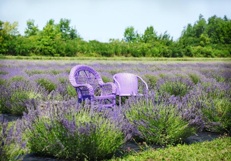 Sillas de la lila en campos de la lavanda foto de archivo libre de regalías