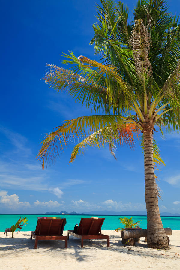 Sillas de playa bajo una palmera foto de archivo