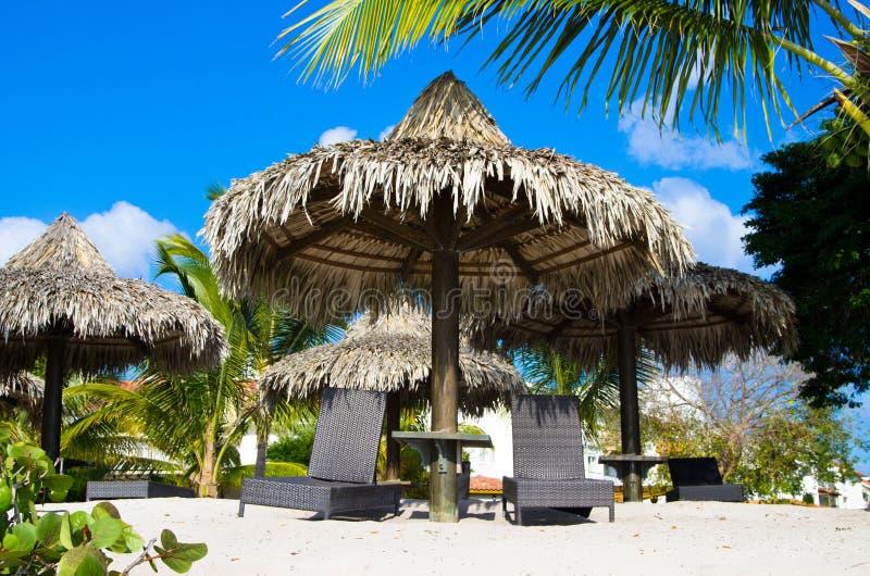 Sillas de playa debajo de la palma imagen de archivo