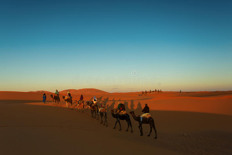 Sillhouette of camel caravan going through the desert at sunset. With blue and red sky royalty free stock image