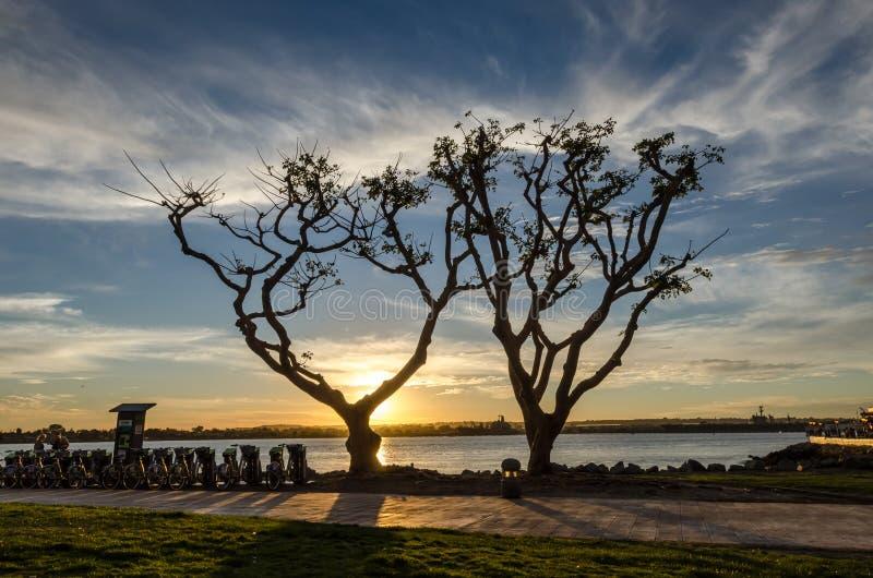 Sillhouette des arbres au coucher du soleil photographie stock libre de droits