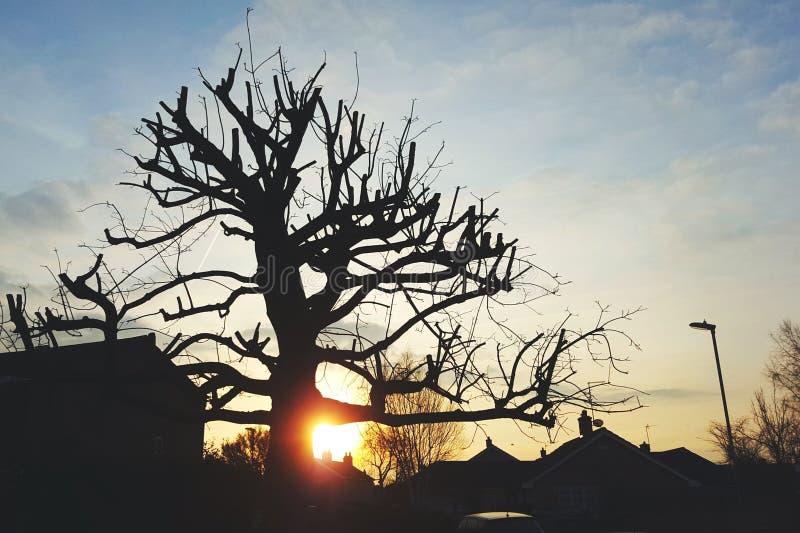 Sillouette του δέντρου στην ανατολή στοκ εικόνα