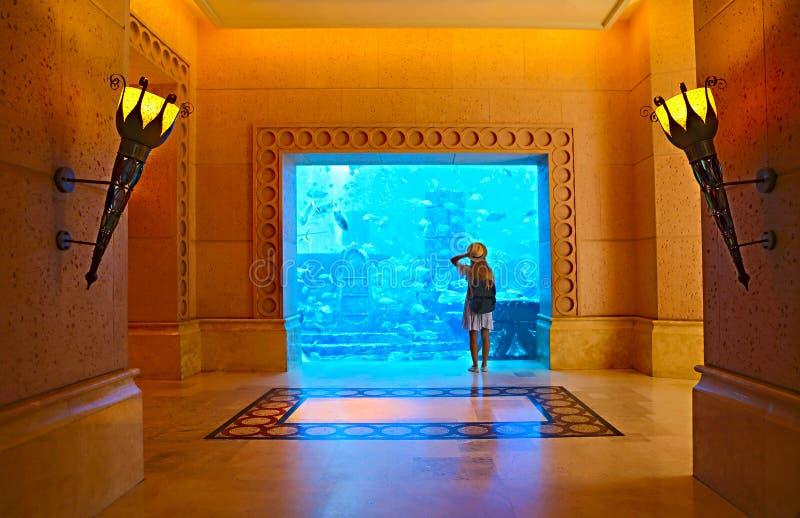 Sillouette della donna che prende immagine in grande acquario illustrazione vettoriale