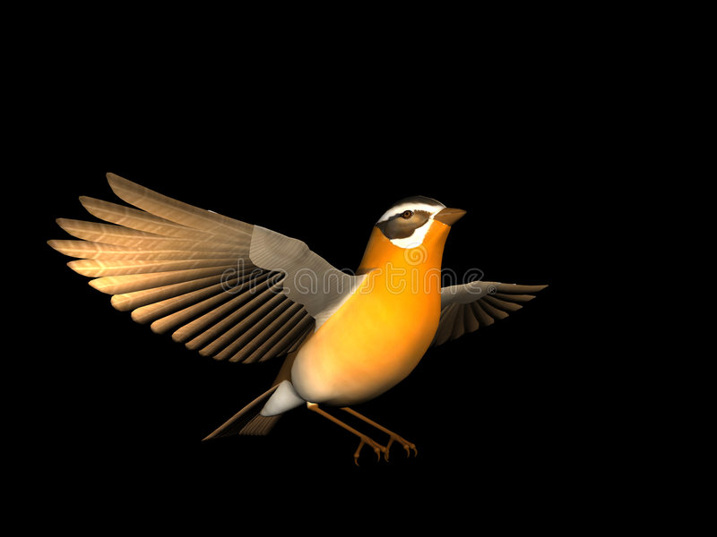 Silly Bird stock image