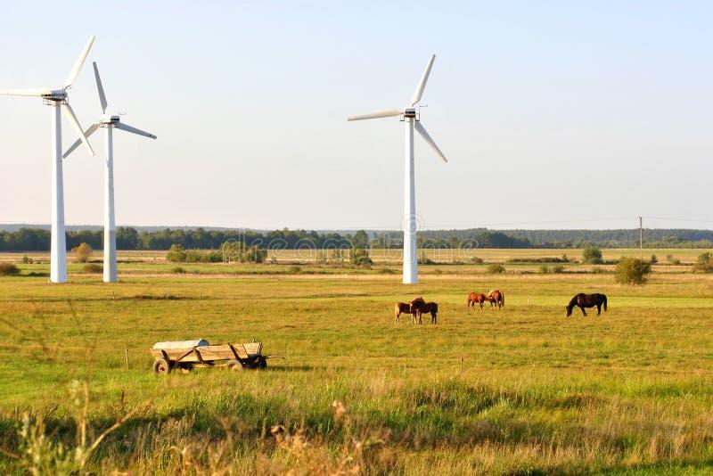 Silnik wiatrowy i konie. obraz stock