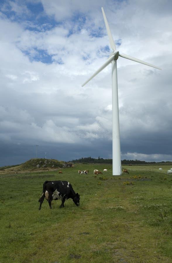 Silnik Wiatrowy i krowa fotografia stock