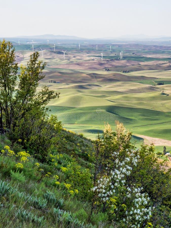 Silniki wiatrowi na wzgórze wierzchołkach z dzikimi kwiatami zdjęcia stock