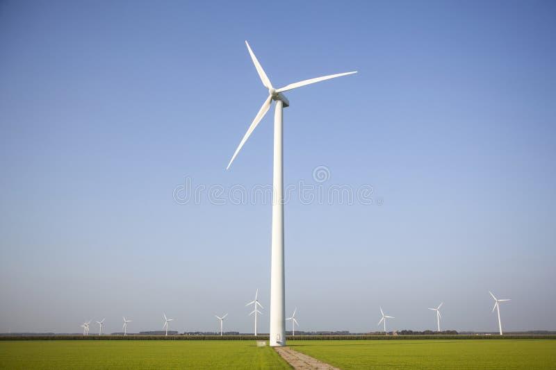 Silniki wiatrowi w zielonych polach w holandiach obrazy stock