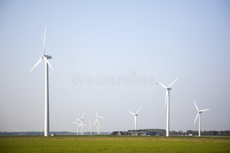 Silniki wiatrowi w zielonych polach w holandiach obrazy royalty free