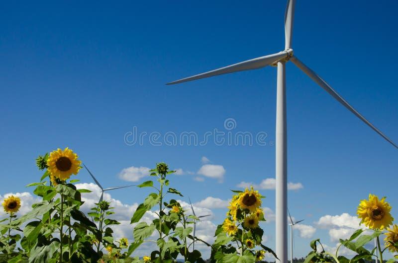 Silniki wiatrowi z słonecznikami obraz royalty free