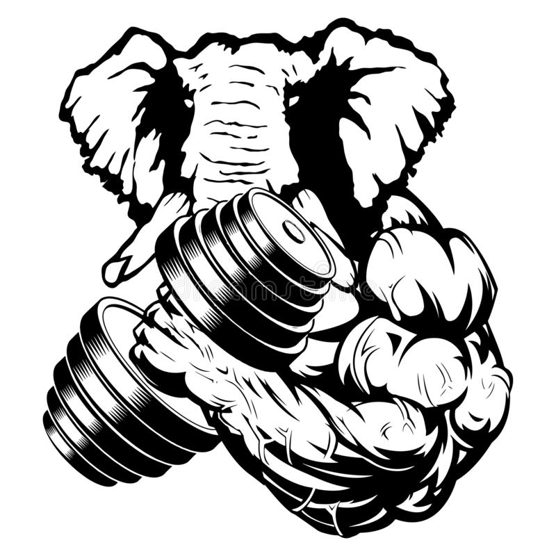 Silny słoń atleta wykonuje ćwiczenie dla bicepsów z dumbbells ilustracji
