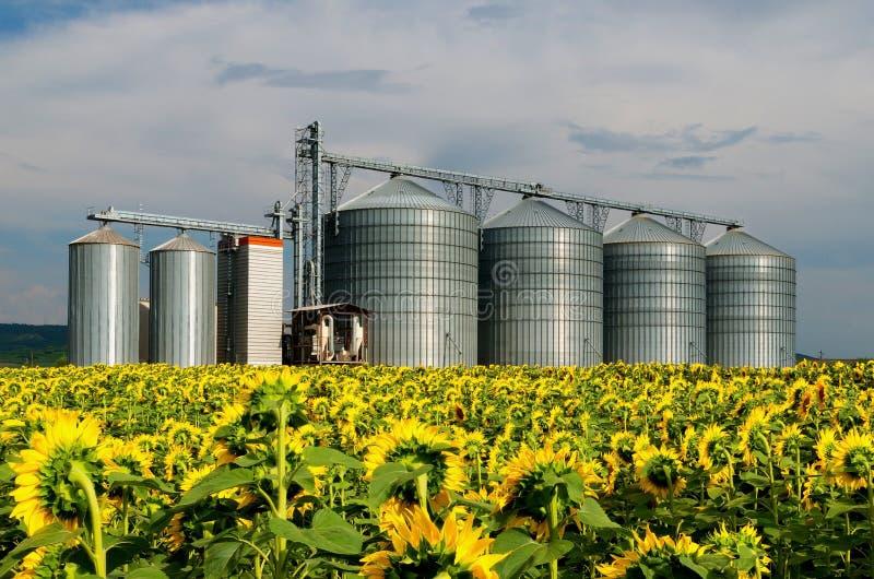 silo's Gebied met zonnebloemen stock foto's