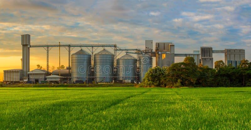 Silos agricoles - extérieur, stockage et séchage de construction des grains, blé, maïs, soja, tournesol contre le ciel bleu image stock