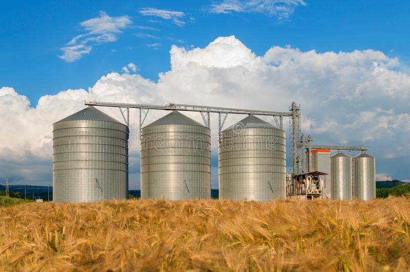 Silos in a barley field. Storage of the crop stock image