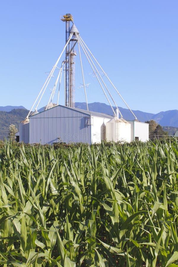 Silos de grano y campo de maíz imagenes de archivo