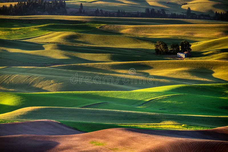 The Silos. Palouse hills in the morning glow under the sun light stock photos