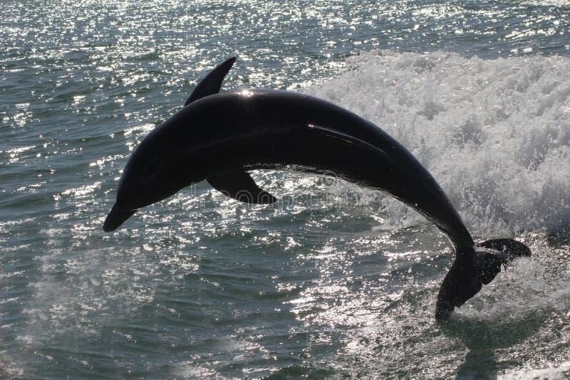 Silouette de um golfinho fotografia de stock