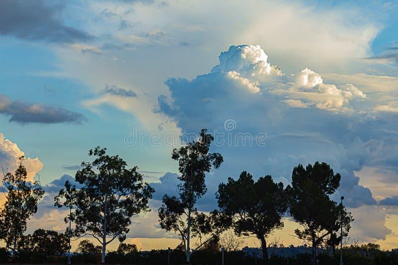 Silouette degli alberi di eualyptus contro il tramonto panoramico con il cumulo, nuvole di nimbus fotografia stock