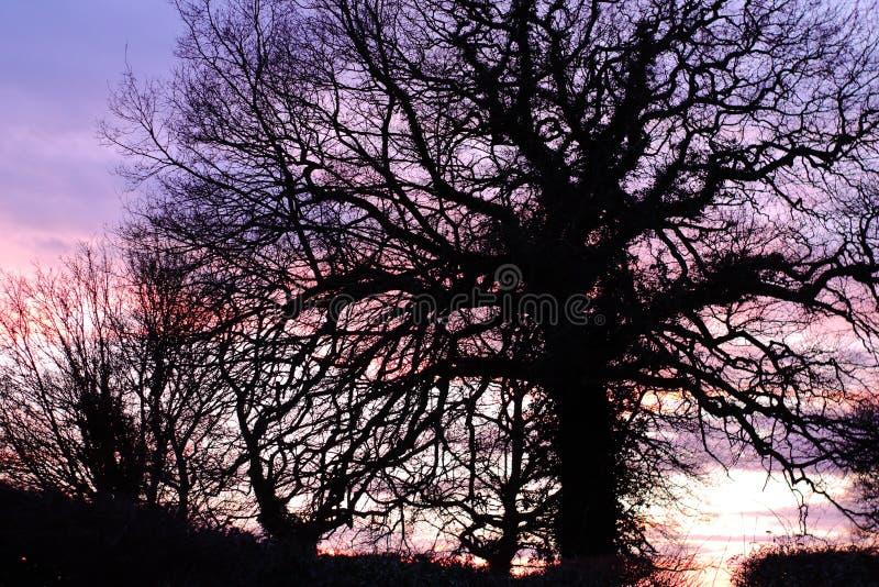 Silouette del árbol de Suffolk imagen de archivo