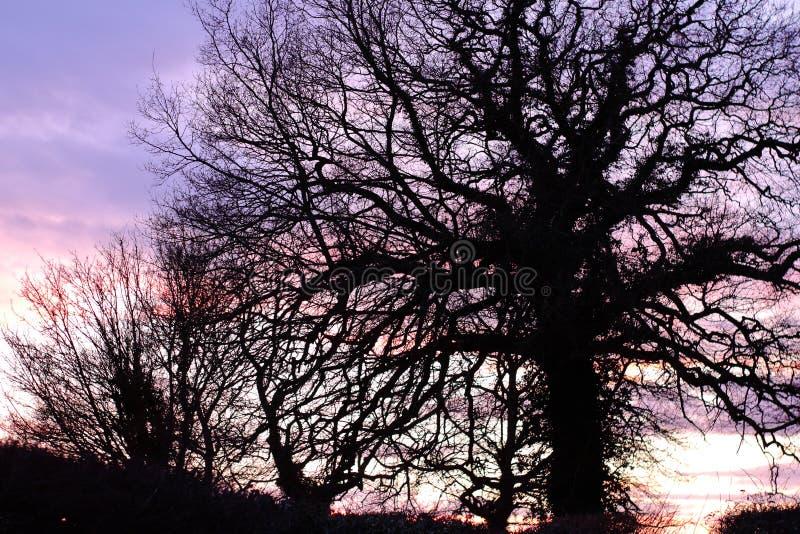 Silouette del árbol de Suffolk fotos de archivo