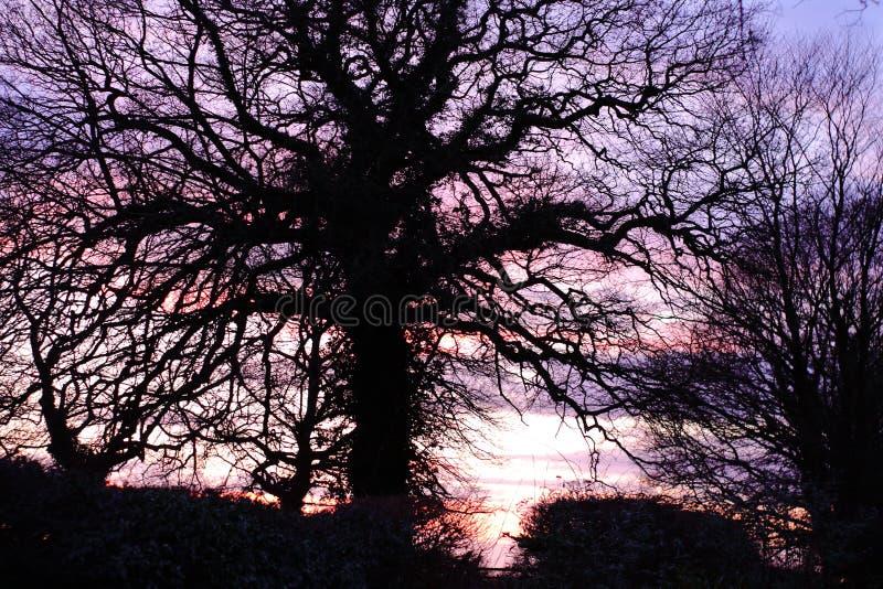 Silouette del árbol de Suffolk foto de archivo