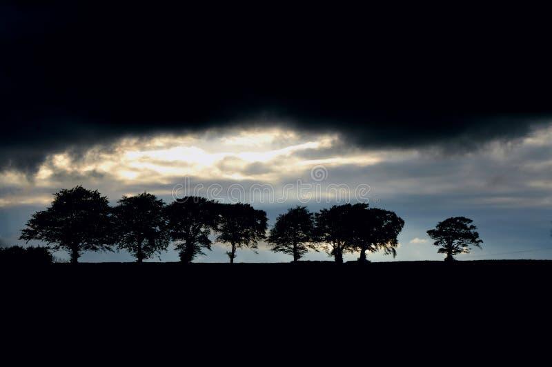 Silouhettes da árvore fotografia de stock royalty free