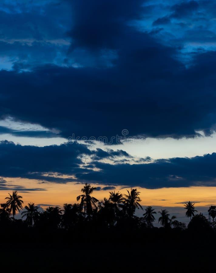 siluate椰子树 库存照片