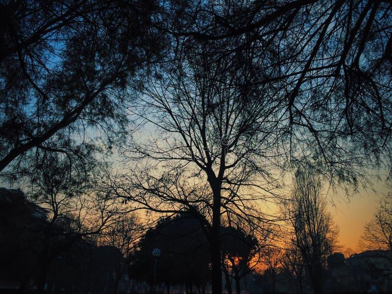 Siluate di tramonto fotografia stock