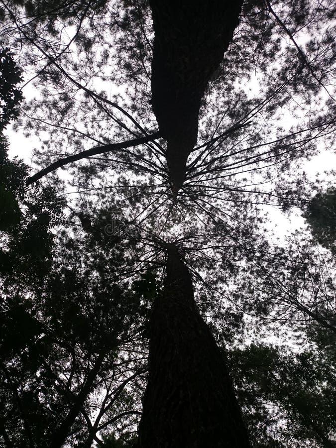 Siluet av trädet royaltyfri fotografi