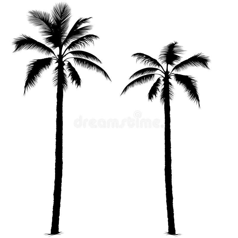 Silueta 1 de la palmera stock de ilustración