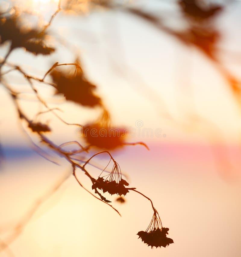 Silueta abstracta de la planta en la puesta del sol imágenes de archivo libres de regalías