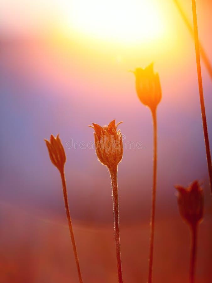 Silueta abstracta de la planta en la puesta del sol imagenes de archivo