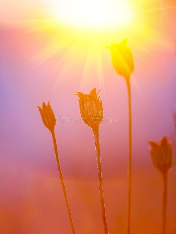 Silueta abstracta de la planta en la puesta del sol imagen de archivo libre de regalías