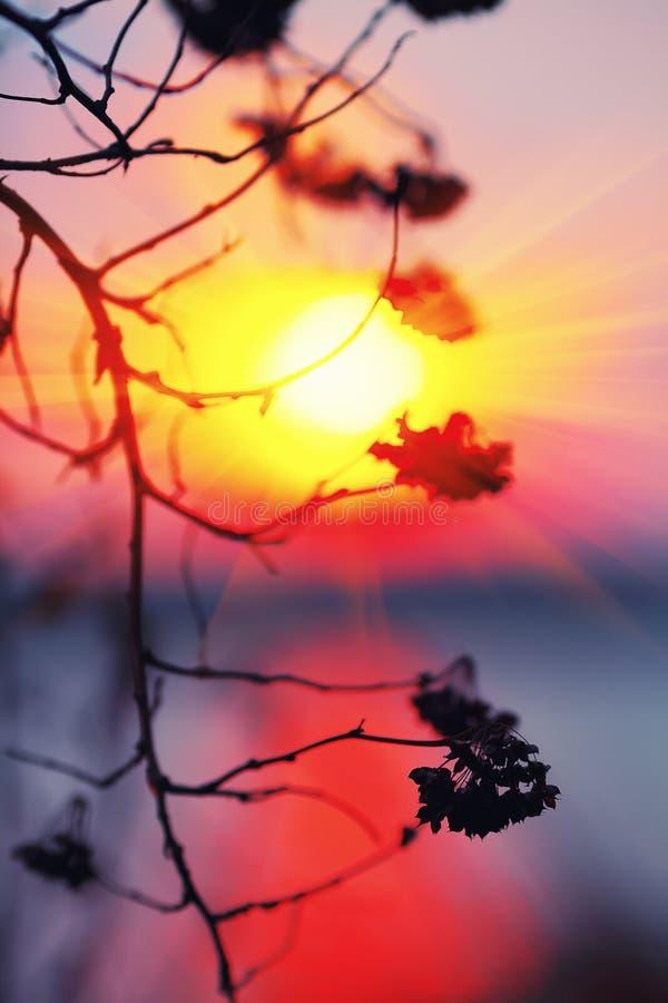 Silueta abstracta de la planta en la puesta del sol fotografía de archivo libre de regalías