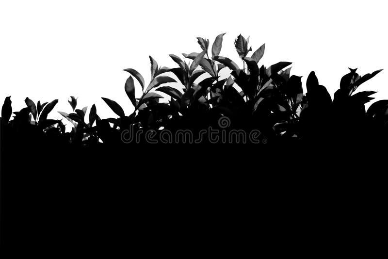 Silueta abstracta del árbol de la hoja en el fondo blanco Blanco y negro imagen de archivo