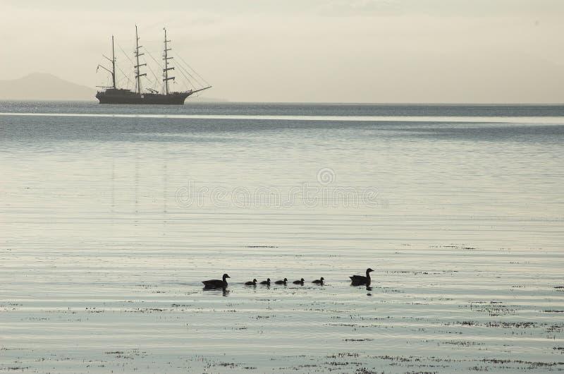 Silueta alta de la nave, anadones, aguas tranquilas foto de archivo libre de regalías