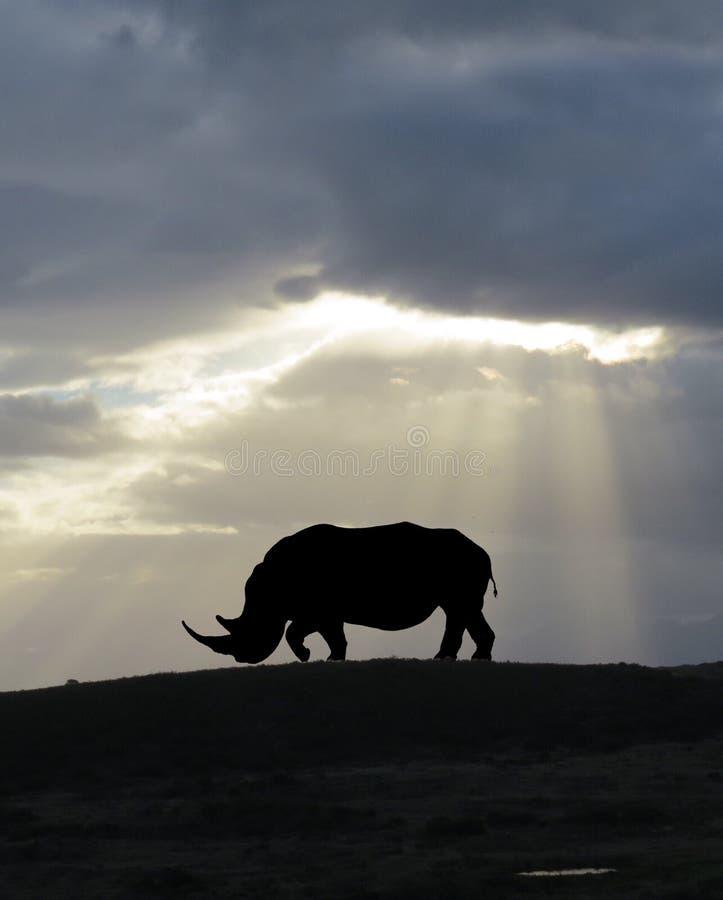 Silueta blanca africana del rinoceronte imágenes de archivo libres de regalías