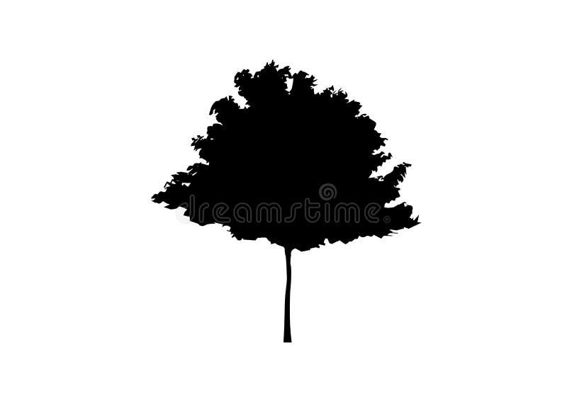 Silueta blanco y negro del arce del vector Ilustración del vector aislada stock de ilustración
