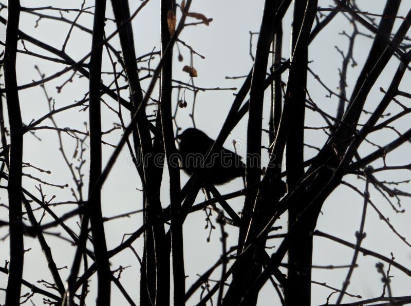 Silueta borrosa del pájaro entre ramas oscuras fotografía de archivo libre de regalías