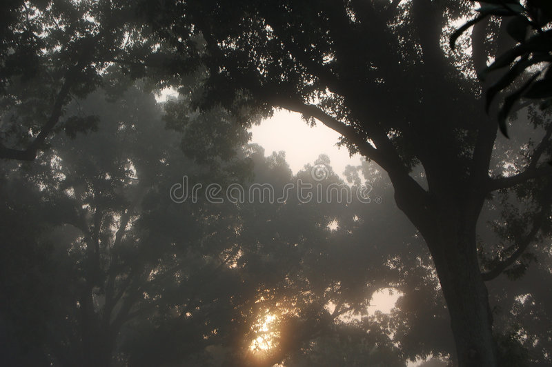 Silueta brumosa de los árboles fotografía de archivo