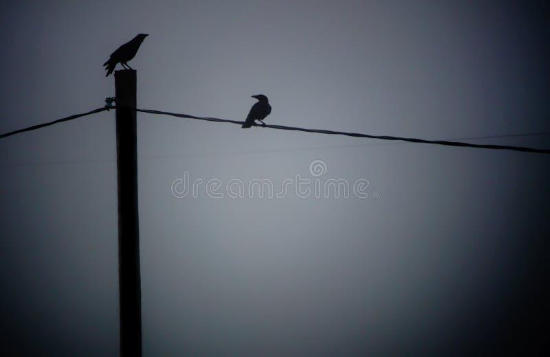 Silueta de cuervos imagenes de archivo