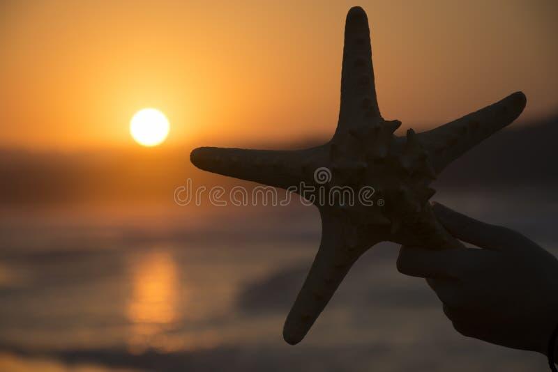 Silueta de estrellas de mar en fondo de la puesta del sol Fondo romántico del verano imagenes de archivo