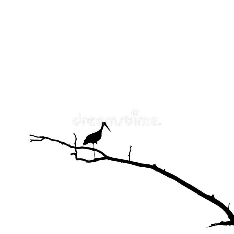 Silueta de la cigüeña que se coloca en una pierna en rama de árbol seca fotos de archivo libres de regalías